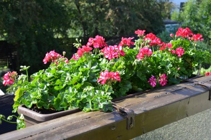Jakie Kwiaty Różnych Gatunków Można Posadzić Obok Siebie W Jednej